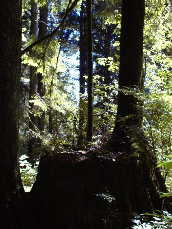 tree-growing-from-stump.jpg